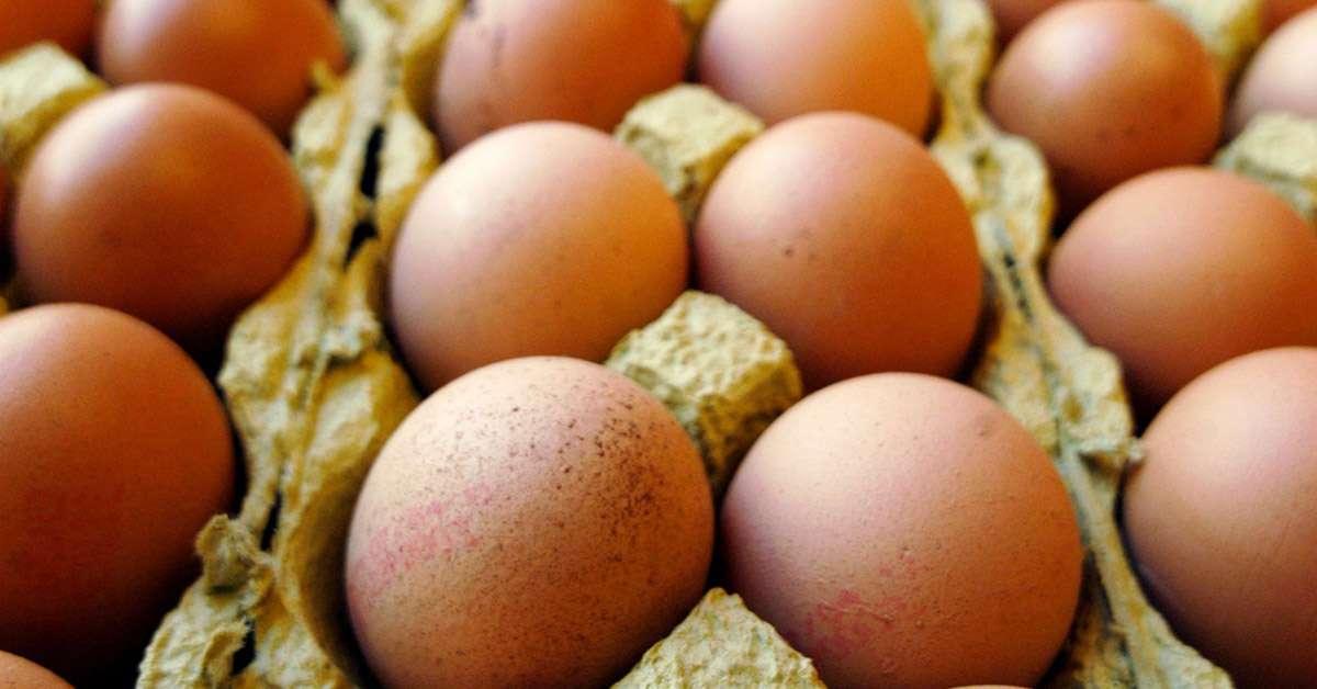 Uova contaminate: sicurezza per i cittadini!