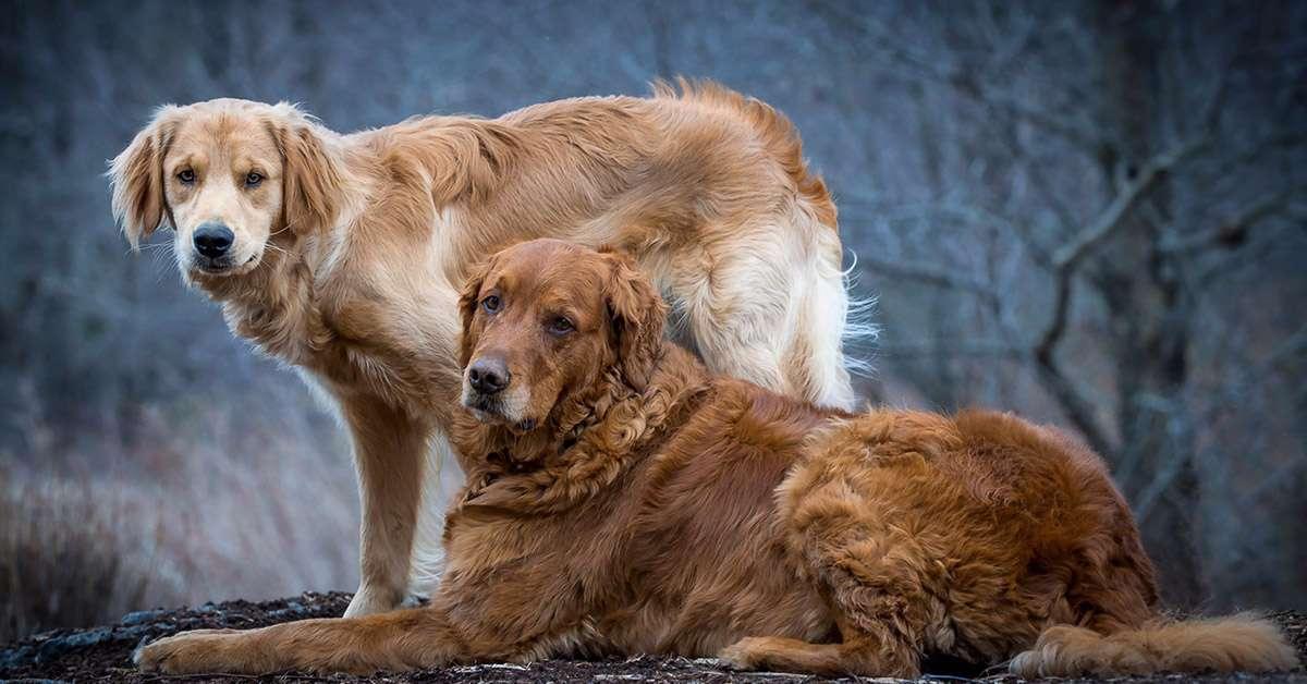 Cani trovati impiccati a un albero: la storia si ripete