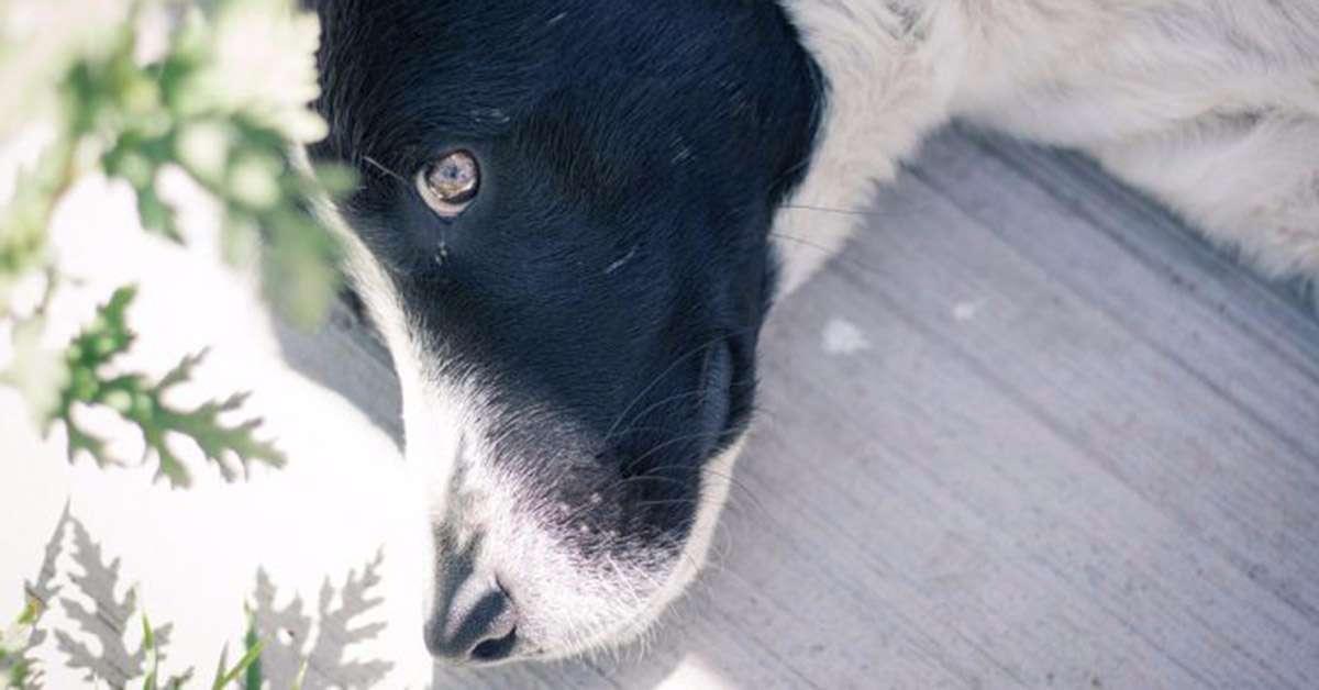 Cane abbandonato sotto il sole: denunciati!