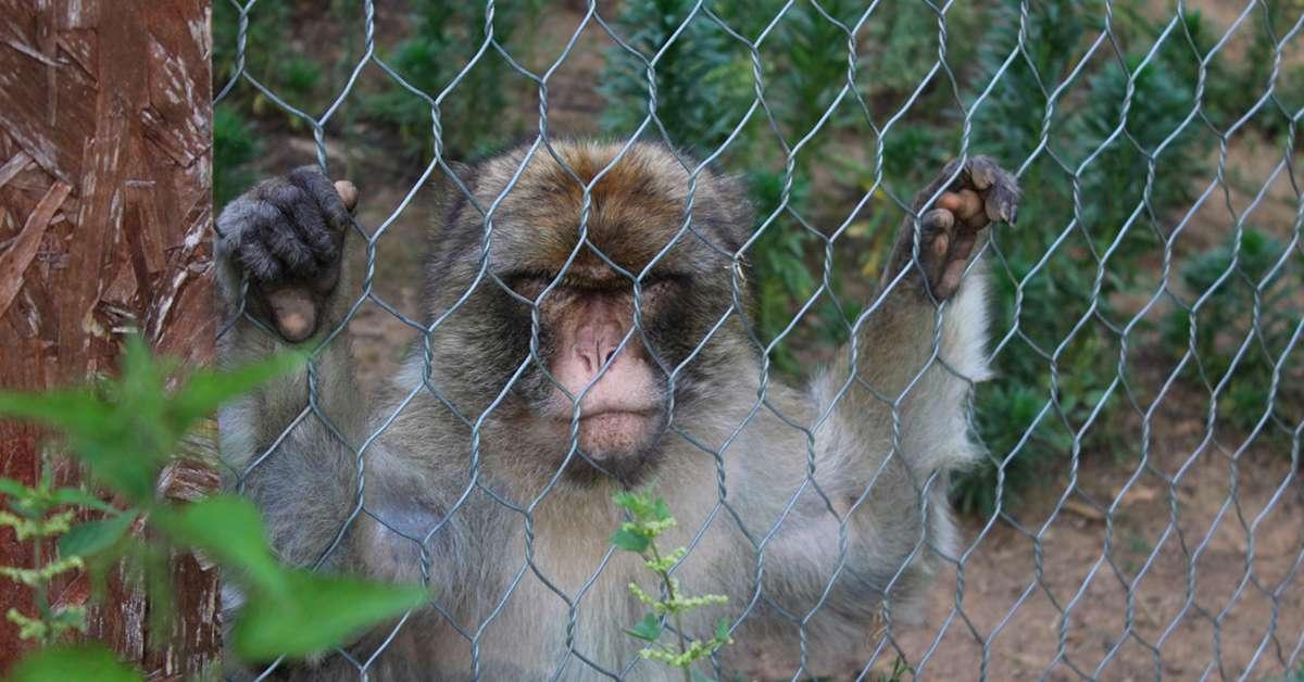 Zoo italiani: scarsa igiene e animali che soffrono!