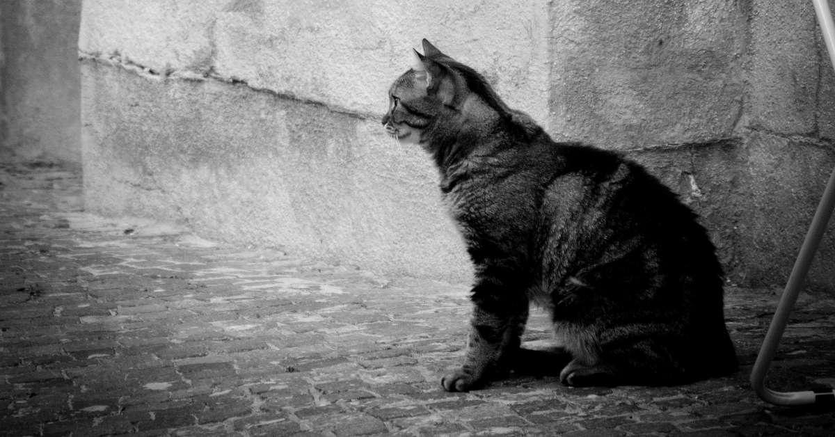 Restituiamo a Venezia i suoi gatti!