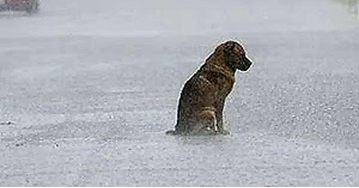 Rintracciare i cani tramite Microchip con GPS