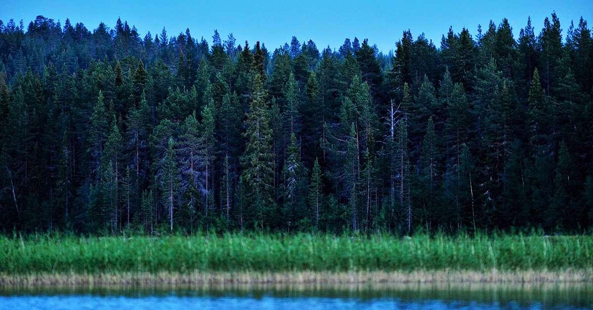 Le foreste del Nord distrutte per i fazzoletti di carta!