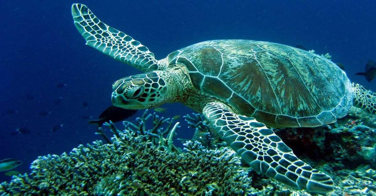 La tremenda fine della tartaruga Gaetana