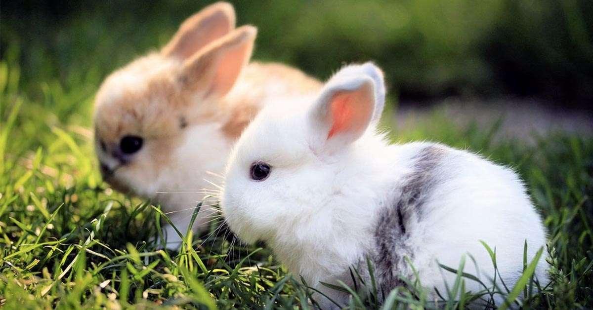 Coniglietti sterminati con il gas a Forlì!