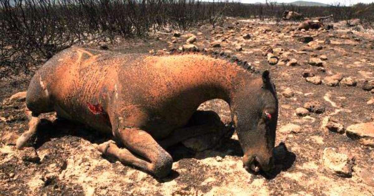 Lombardia Istituire aggravante per strage di animali