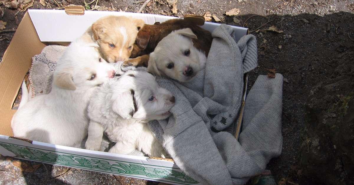 Maltratta dei cuccioli con una paletta