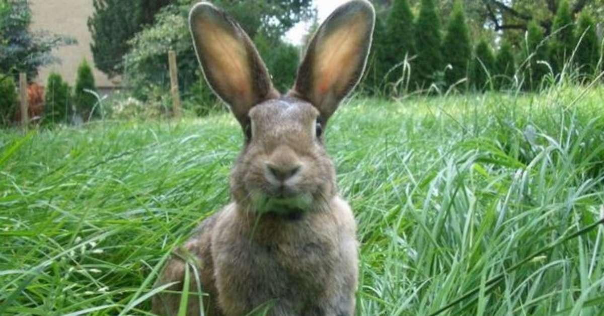 Isola del Giglio: le trappole per conigli sono crudeli e illegali!