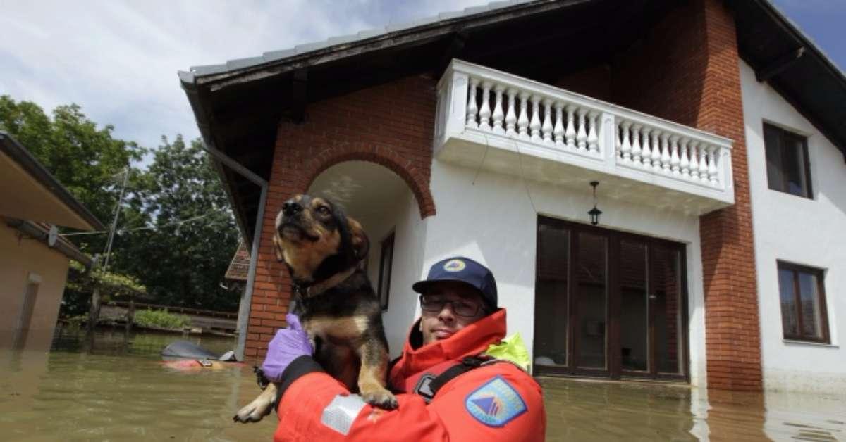 GOVERNO E REGIONI INTEGRINO LEGGE PROTEZIONE CIVILE ANCHE PER ANIMALI