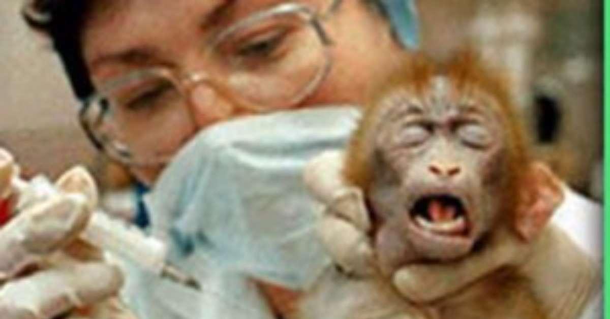 Come possiamo ancora negare che gli animali soffrano?