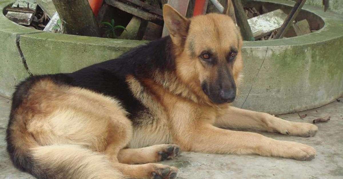Solo sei mesi di carcere per aver preso a calci e maltrattato il suo cane!