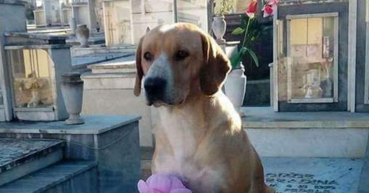 Il cane del cimitero avvelenato: giustizia per Roby!