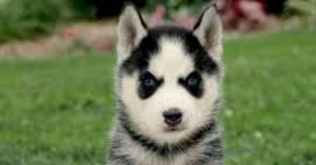 No alla vendita online di cani senza pedigree