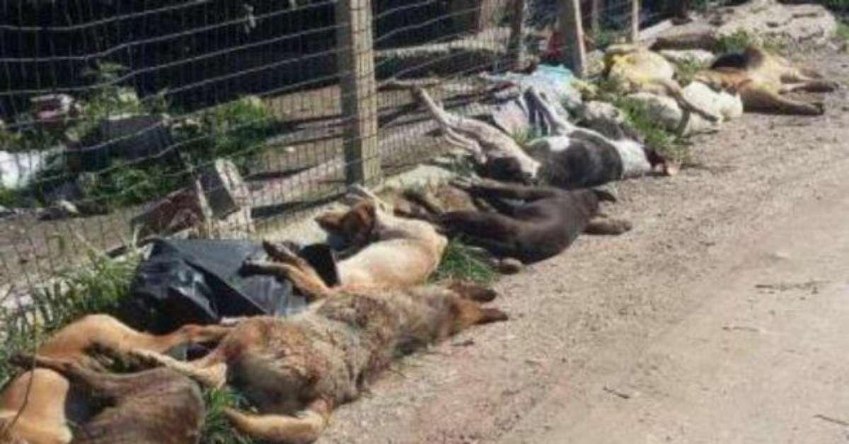 Cani randagi di Sciacca: fermiamo questo sterminio