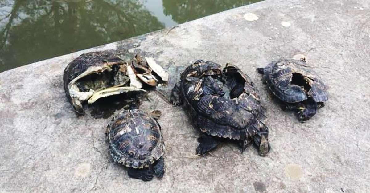 Giustizia per le tartarughe uccise a Palermo!
