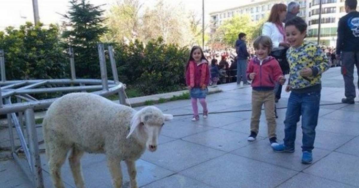 agnello come primo premio della lotteria di Pasqua