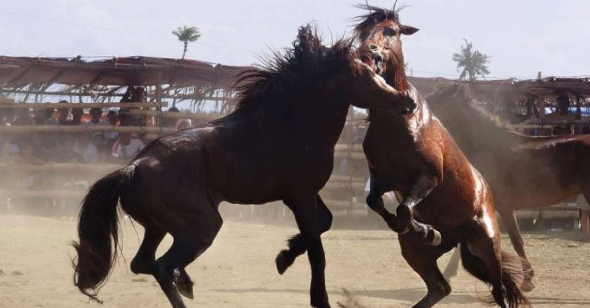 Petizione per porre fine alla lotta organizzata a cavallo
