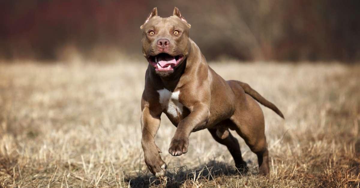 Educazione alla conduzione dei cani in aree pubbliche