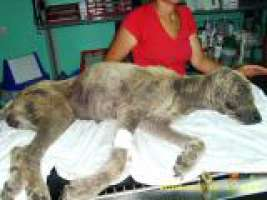 martirio di un cane