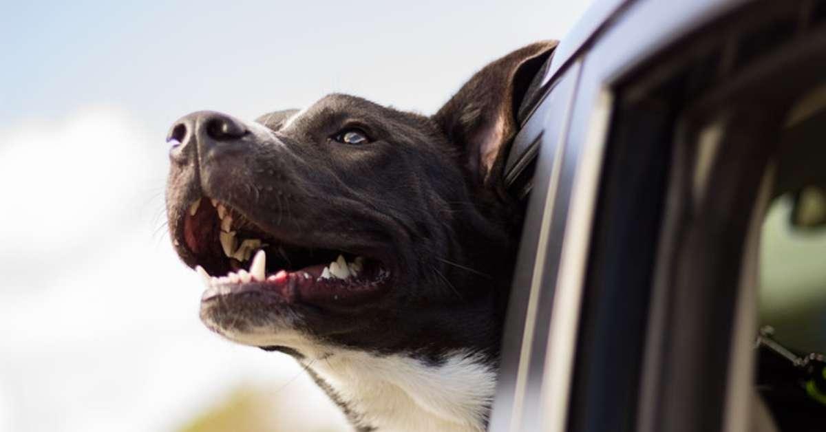 Proteggi animali domestici in auto calde