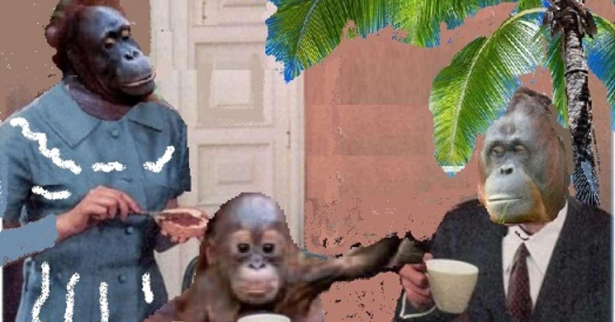STOP OLIO DI PALMA: salviamo gli oranghi del Borneo