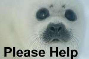 aiutiamo le foche non sono un sport