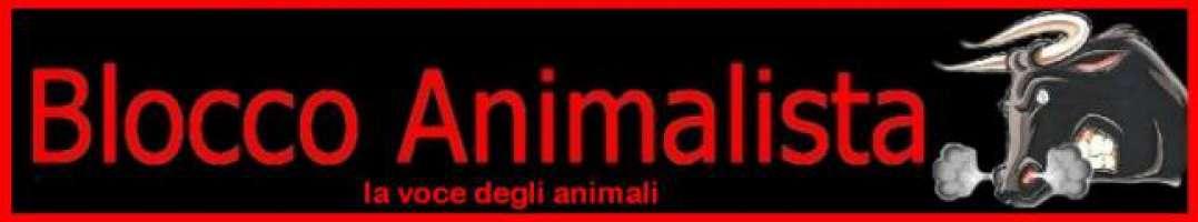 Petizione contro la vendita degli animali nei negozi