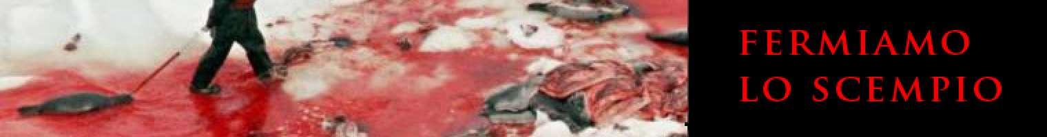 salviamo le foche: è giusto firmare