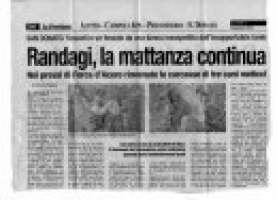 San Donato: cani randagi uccisi e gettati in un dirupo