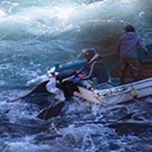 UPDATE strage di delfini in Giappone